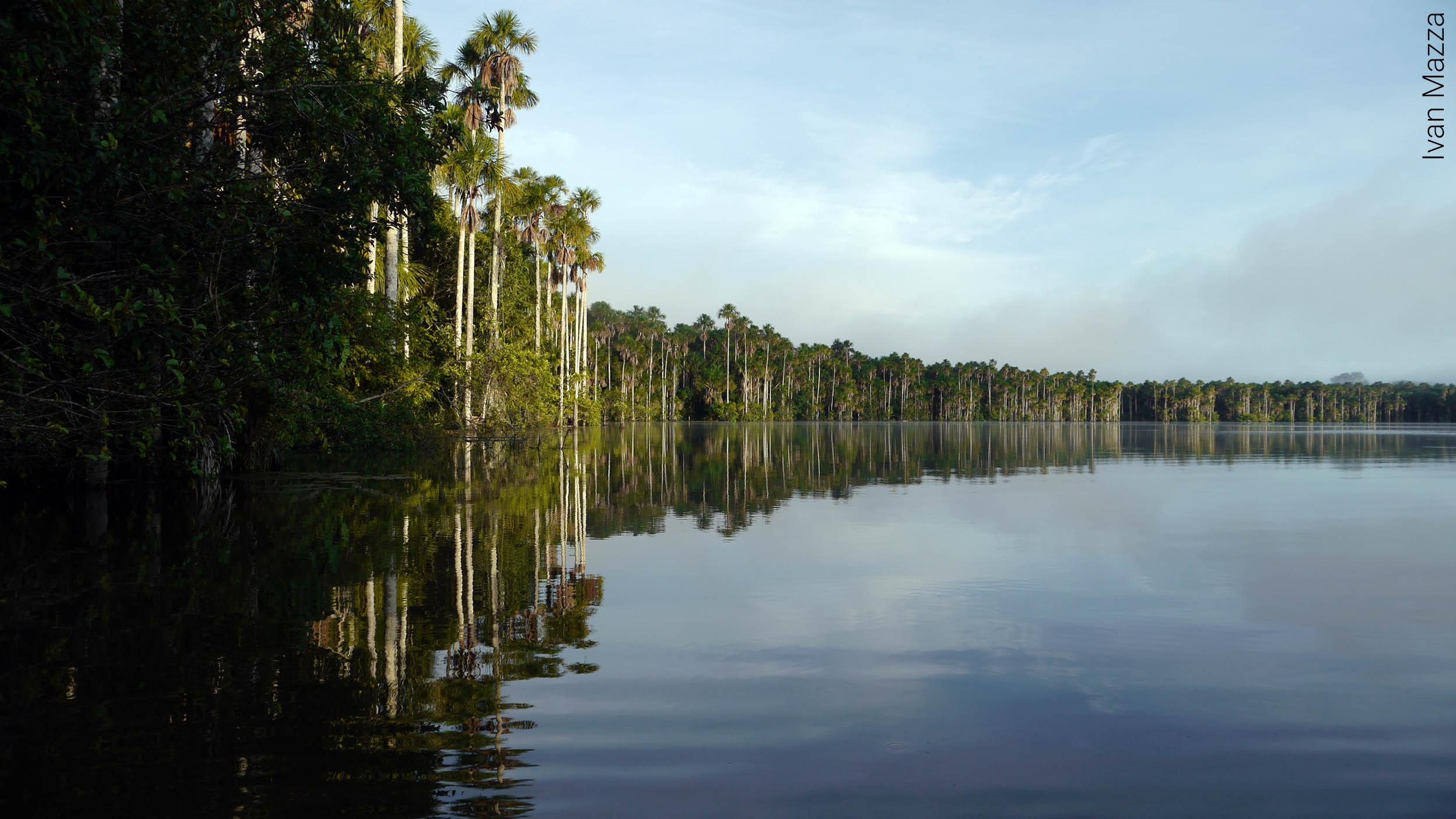 Amazonia - Lago Tambopata